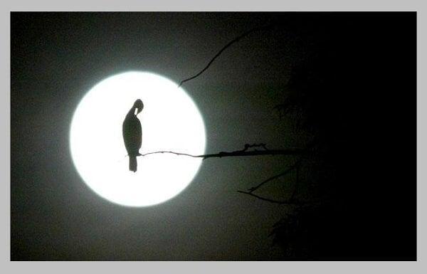 Soledad nocturna