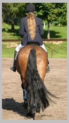 Dama y caballo